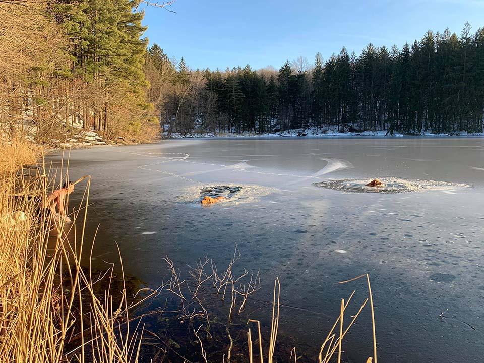Perros atrapados en lago congelado