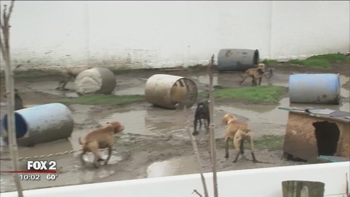Perros en criadero