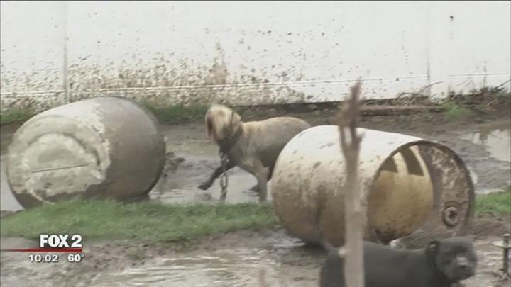 Perros en malas condiciones