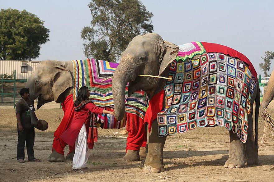 Personas tejen suéteres para elefantes