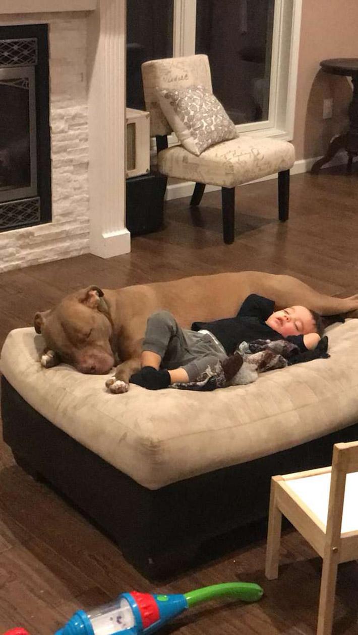 Pitbull reconforta a niño enfermo