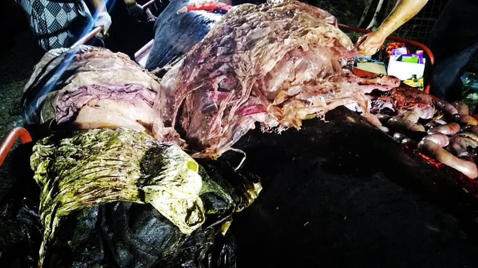 Plástico dentro de ballena