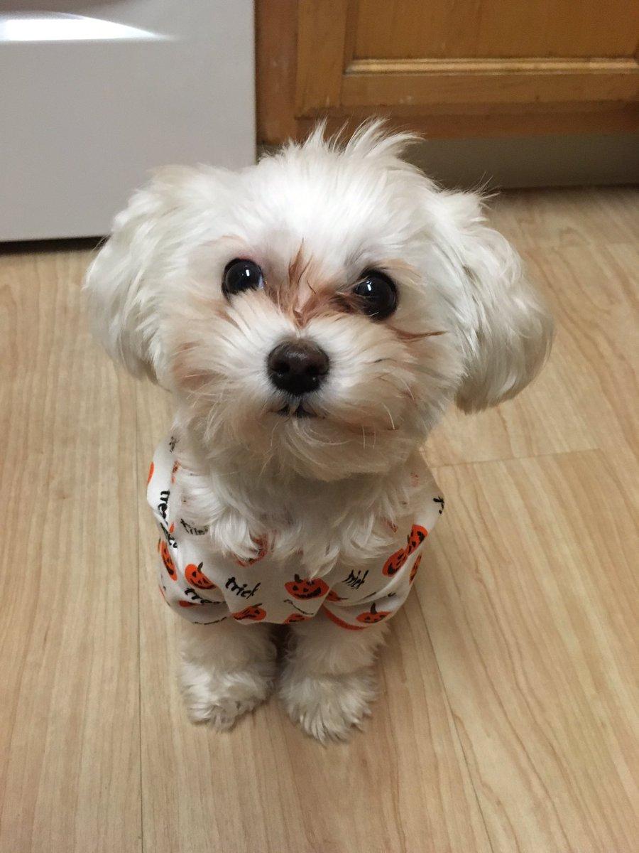 Pluto con pijama
