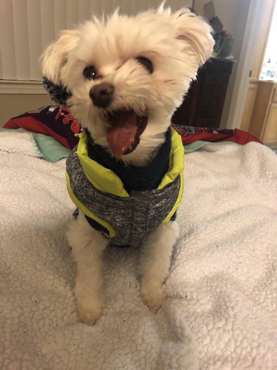 Pluto sonriendo