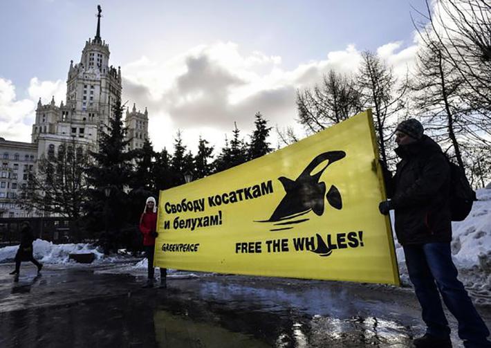 Presionan a Rusia para liberar ballenas