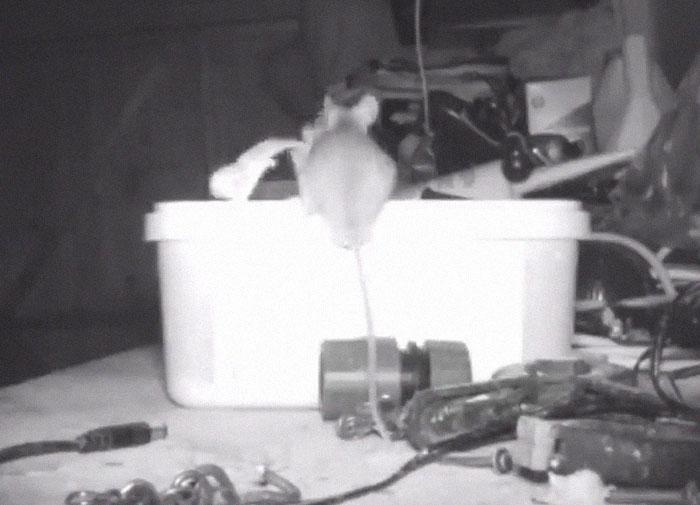 Ratón organiza cosas por un mes