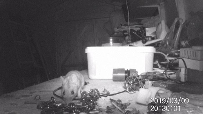 Ratón organizando cosas