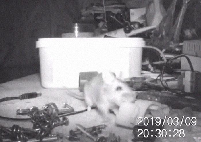 Ratón que organiza cosas