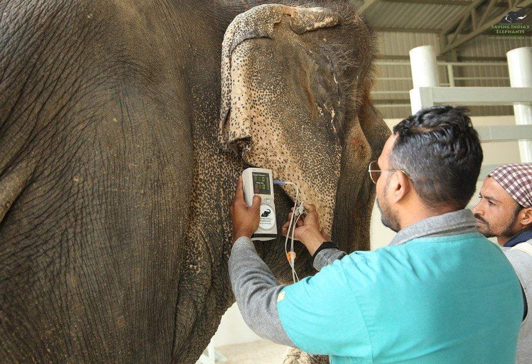 Realizan examen a elefante