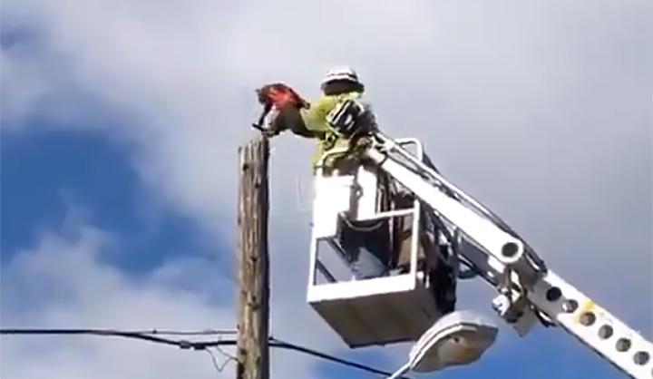 Trabajador suspendido después de rescatar a un gato