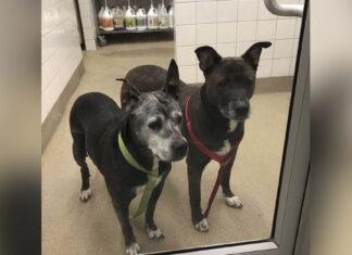 Trabajadores encuentran a dos perros mayores abandonados en un baño