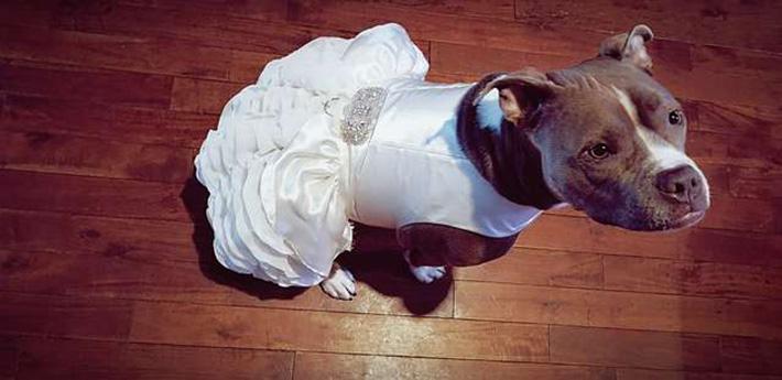 Vestido de novia para Bailey