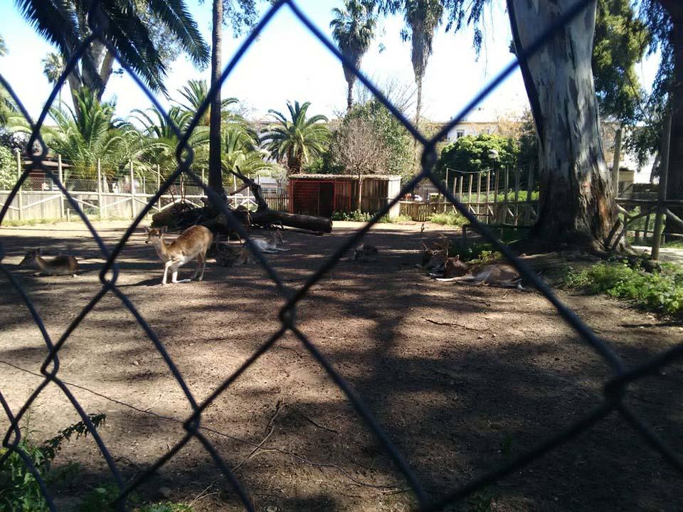 Zoo de España cerrado