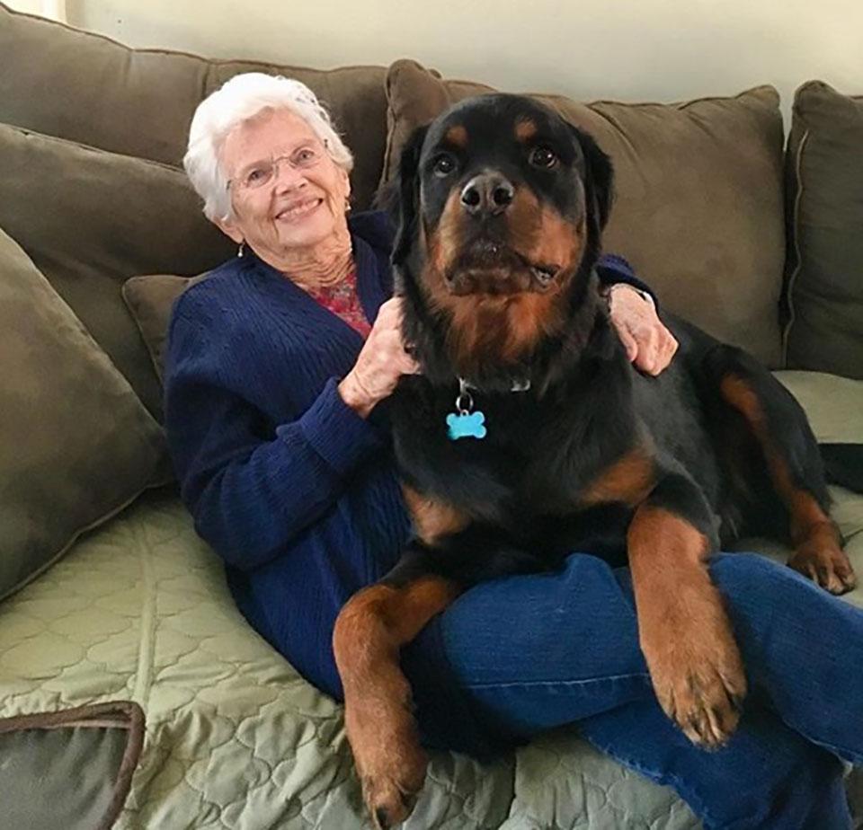 abuelita y rottweiler son parte de una linda familia