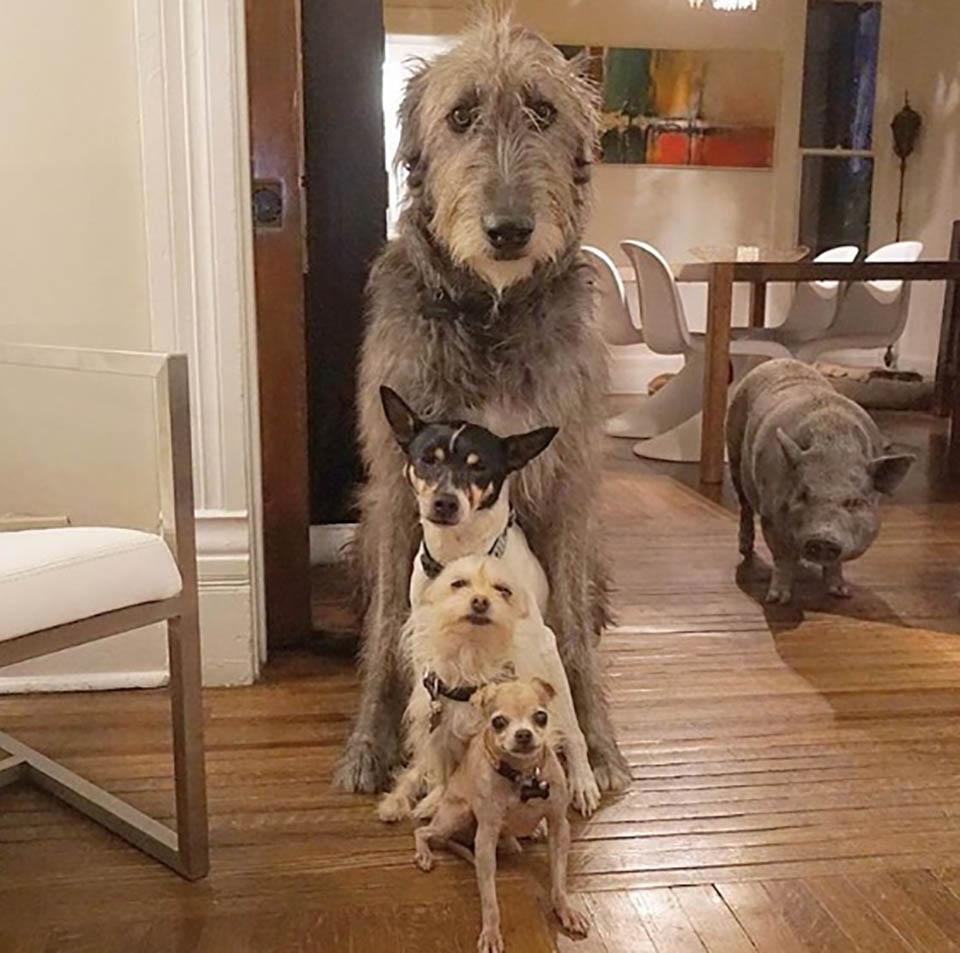 Animales adoptados posan para foto