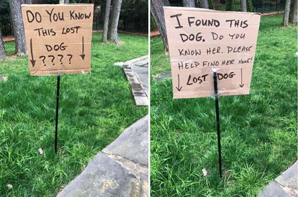 avisos hecho por hombre que encontro perrita perdida