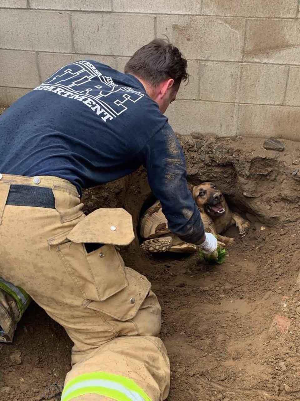 bombero ayuda a perro y tortuga en tunel de tierra