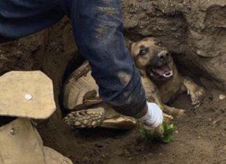 bomberos rescatan a perrito y tortuga que quedaron atrapados bajo tierra