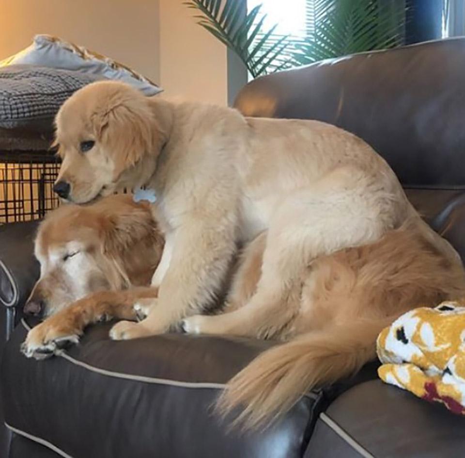 Cachorro es una buena compañía para perro ciego