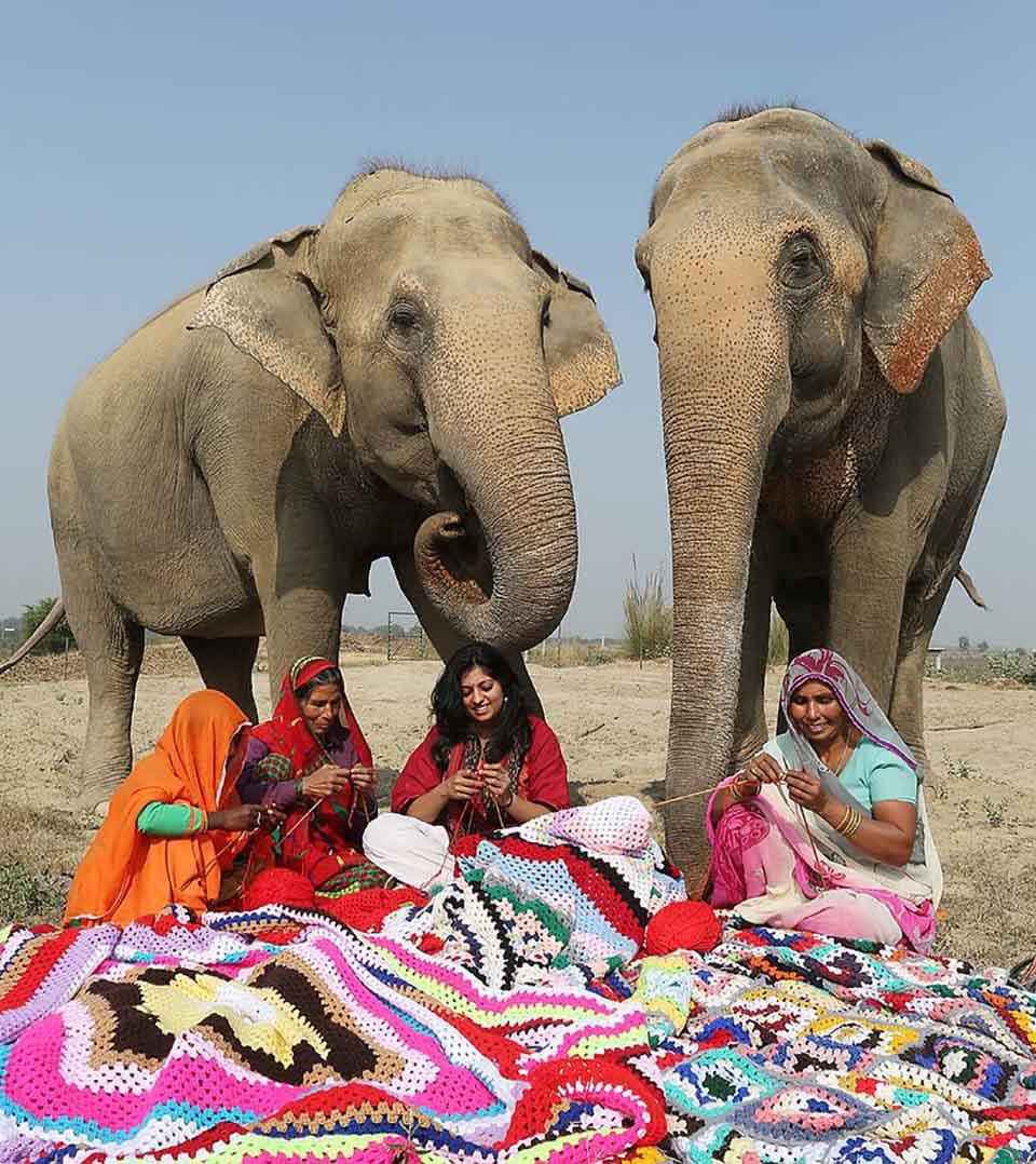 Cuatro mujeres tejiendo suéteres para elefantes