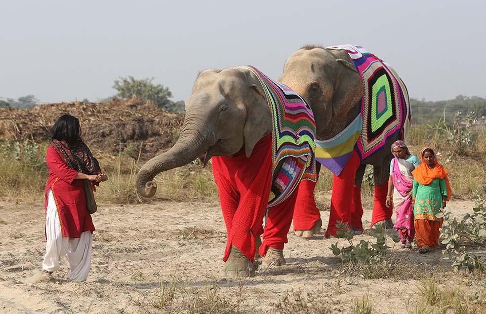 Elefantes con suéteres