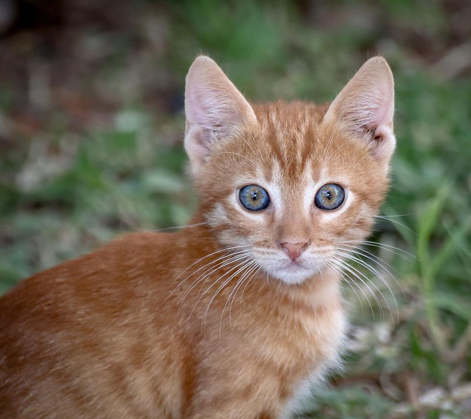 Gatito amarillo