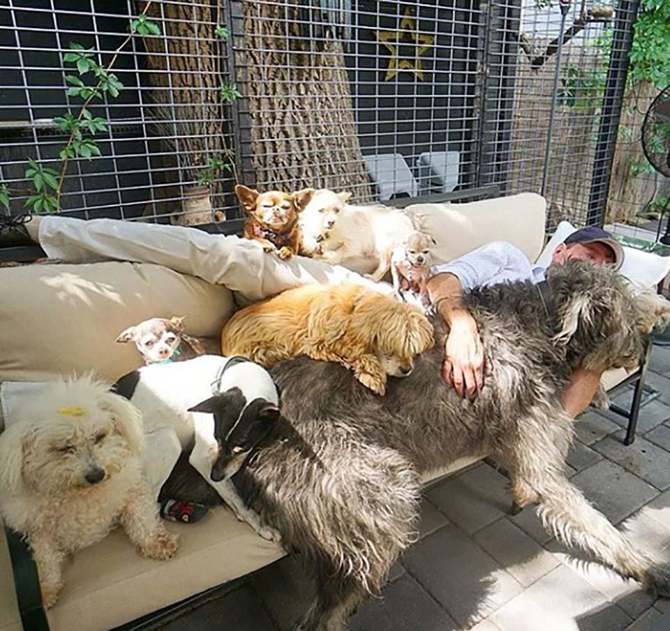 Hombre descansa con sus animales adoptados