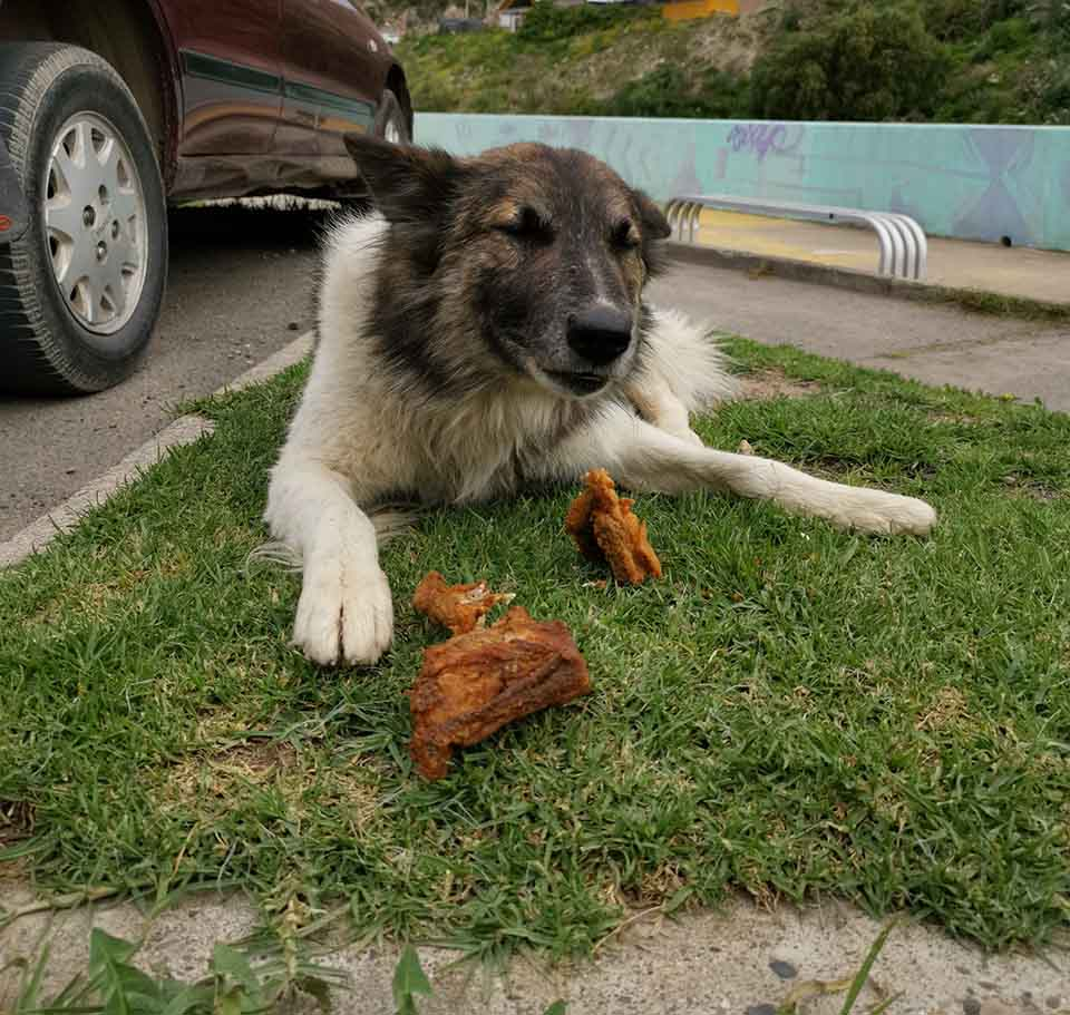 Hombre lleva alimento a perro sin hogar