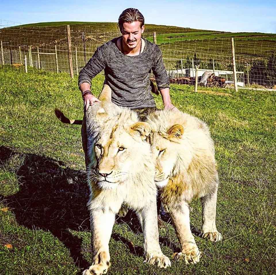 Hombre pasea a leones