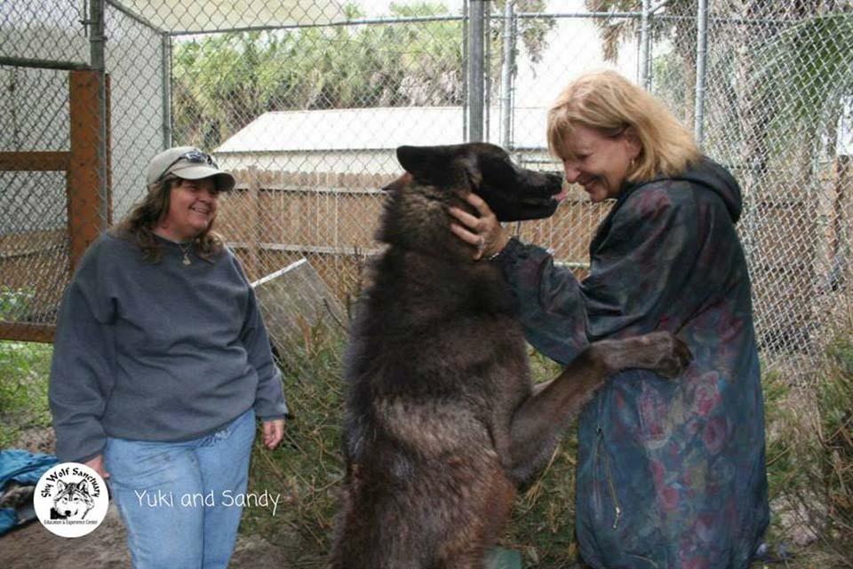 lobo es amigable