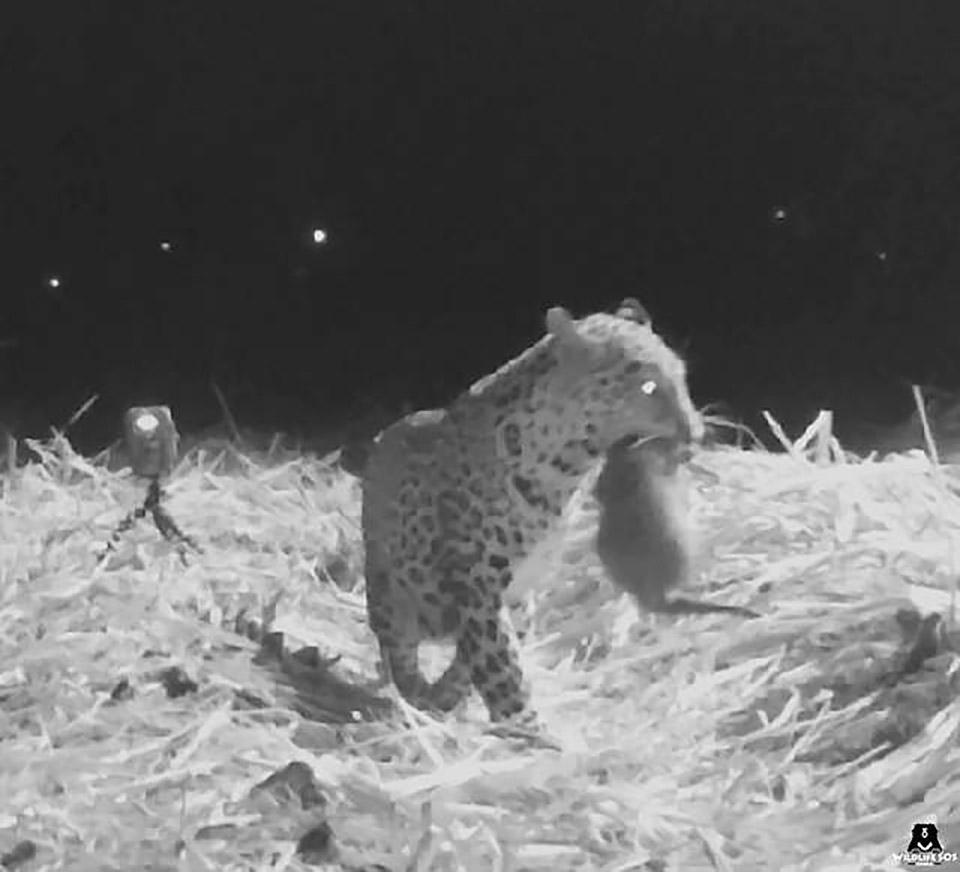 Madre sostiene a su leopardo