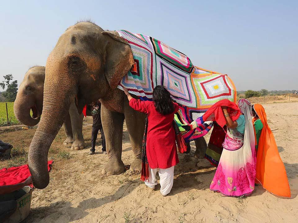 Mujeres colocan suéter a elefante