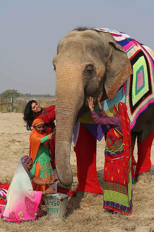 Mujeres cuidan a elefante