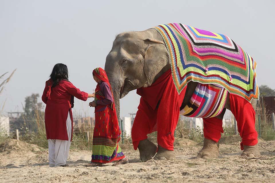 Mujeres guían a elefante que lleva un suéter