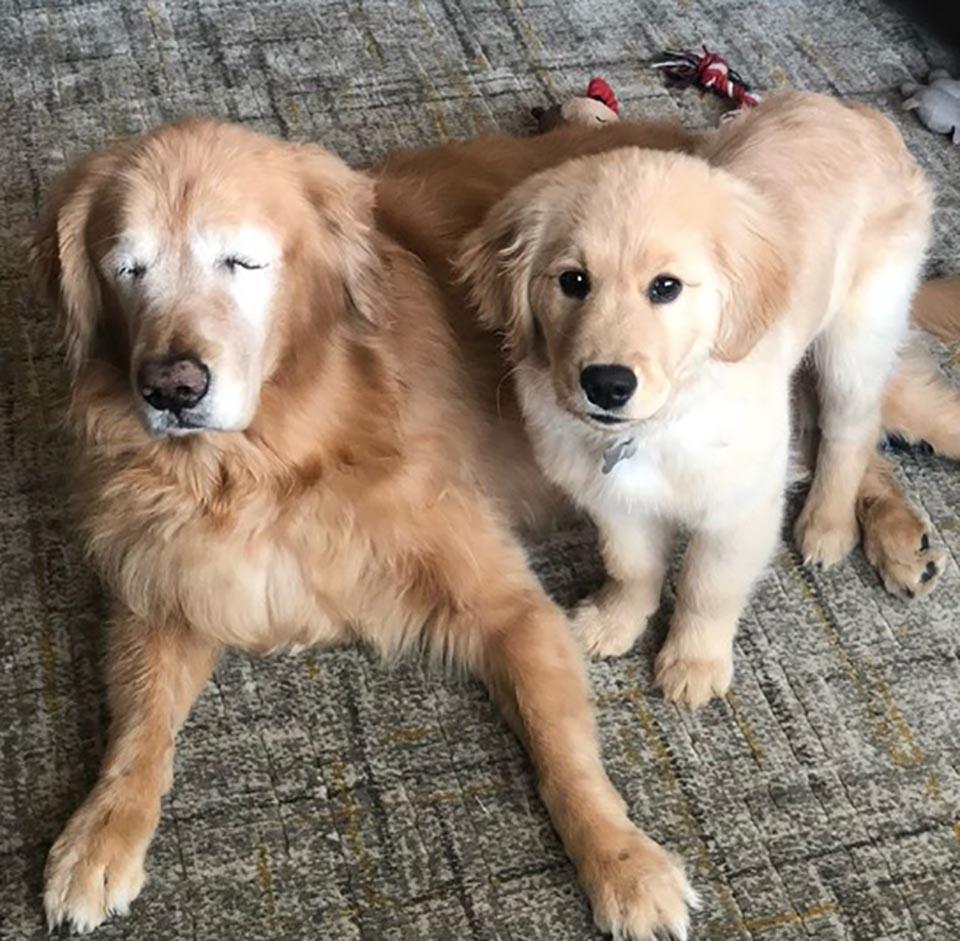 Perrito ciego y cachorro son los mejores amigos