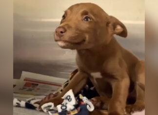 perrito encuentra una nueva familia gracias a su hermosa sonrisa