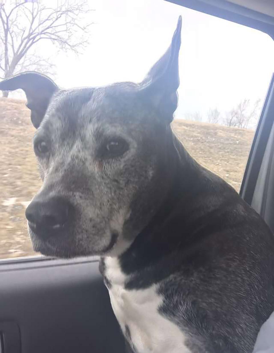 perrito mayor en auto