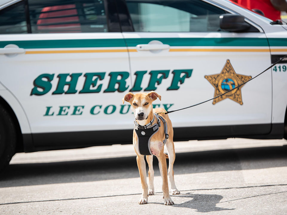 Perrito rescatado ahora es oficial