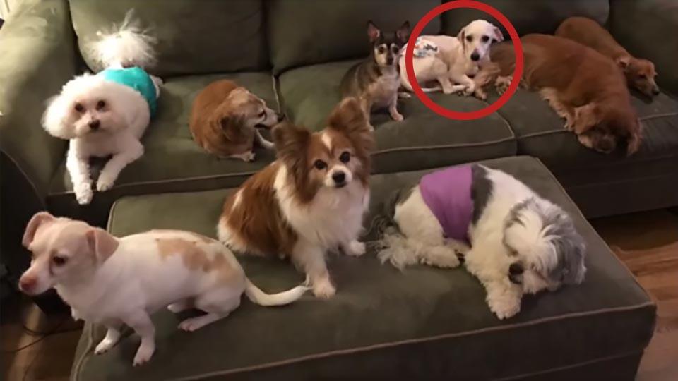 perrito sobreviviente y sus compañeros caninos
