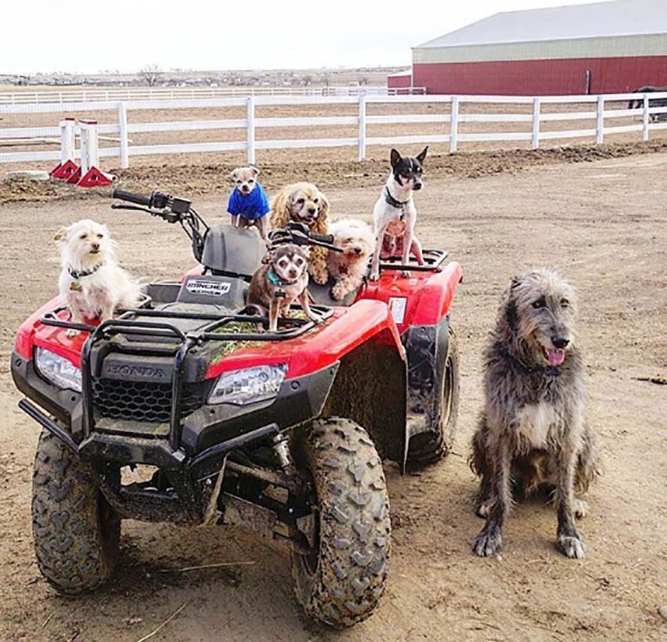 Perritos mayores adoptados