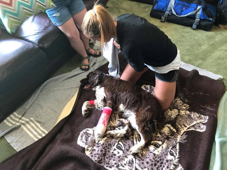 Perro en hogar con pata inmovilizada