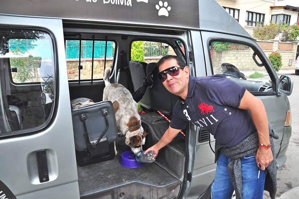 Perro en minibus
