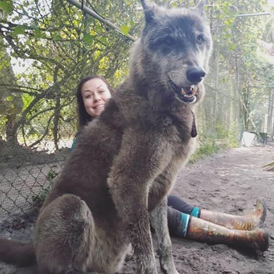 perro lobo y humana