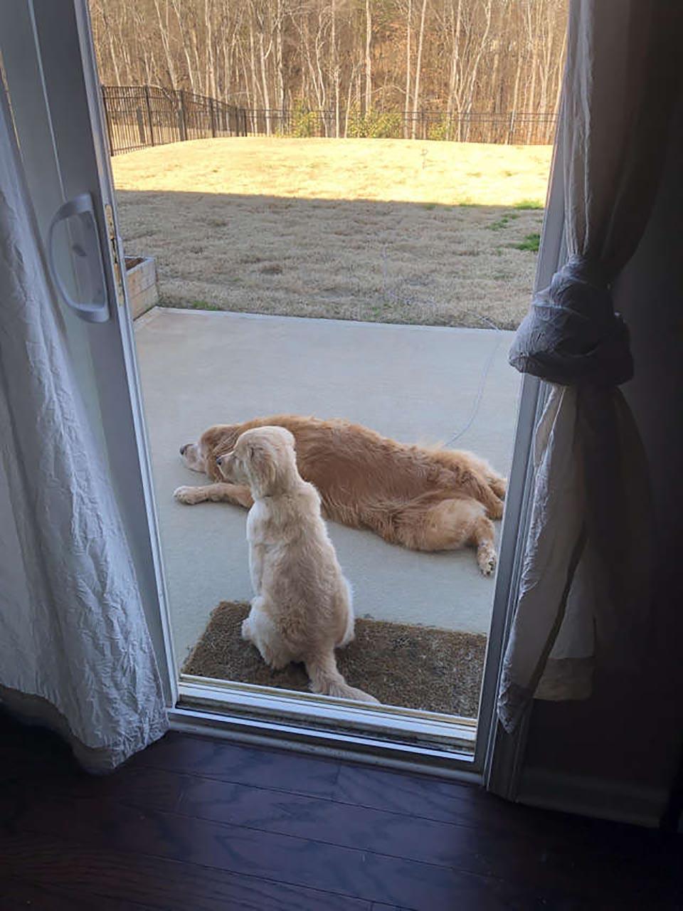 Perros demuestran el verdadero significado de amistad