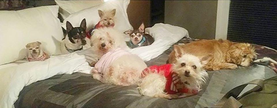 Perros en cama