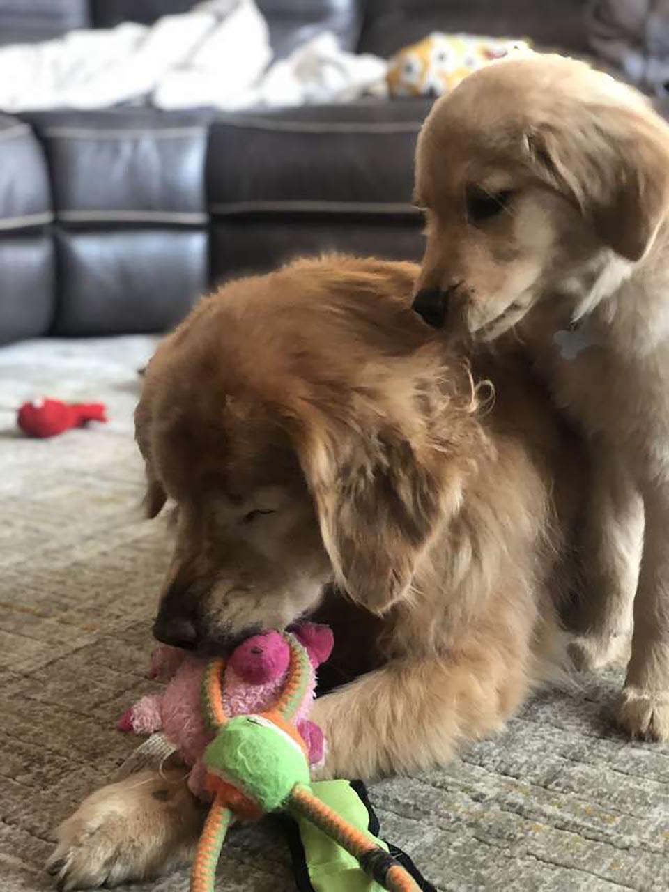 Perros inseparables