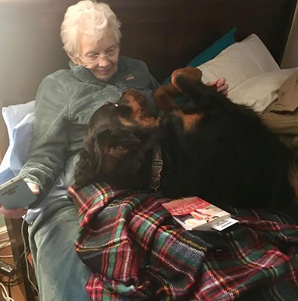 rottweiler acurruca a abuelita en la cama