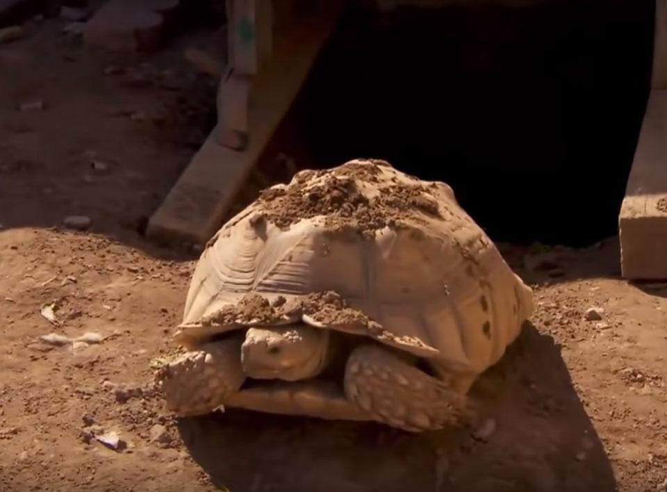 tortuga rescata