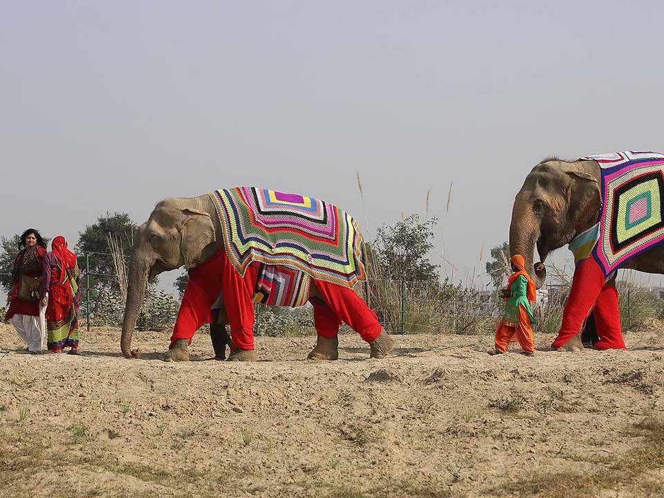 Trabajadores y elefantes con suéteres