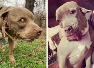 Adoptan a perrita que tiene una segunda boca donde debería estar su oído